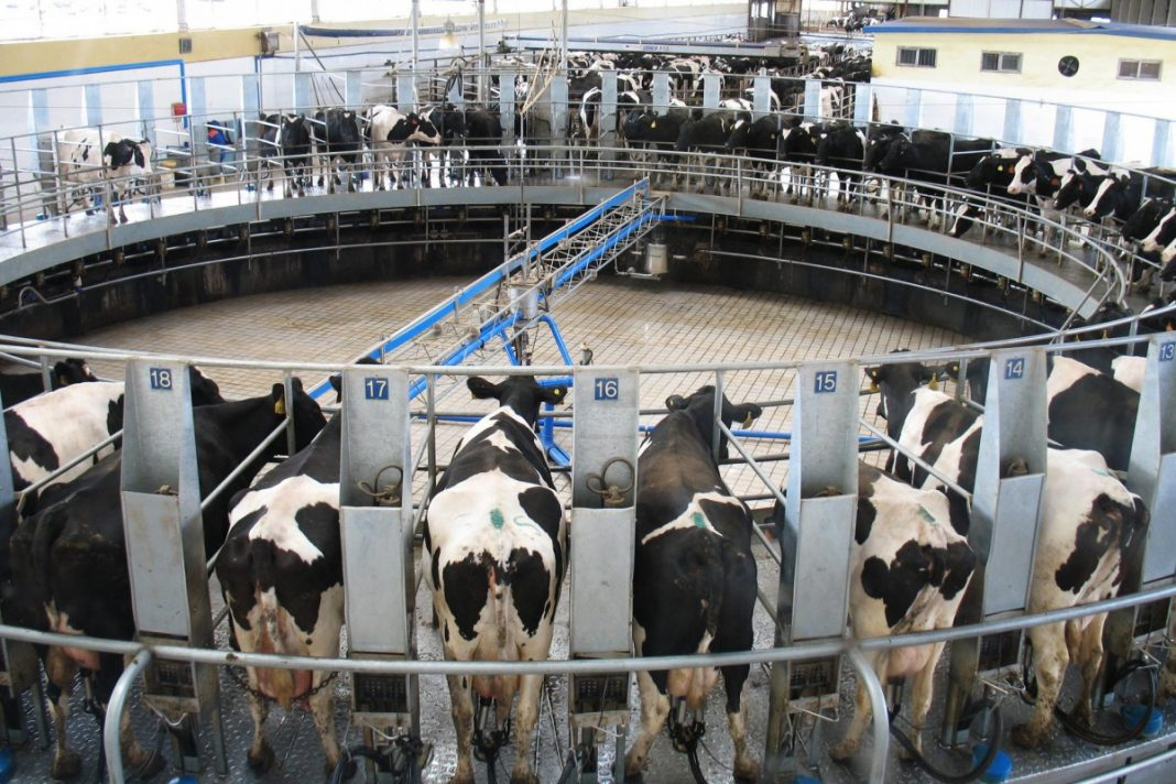 Importance of Technology in Livestock Breeding