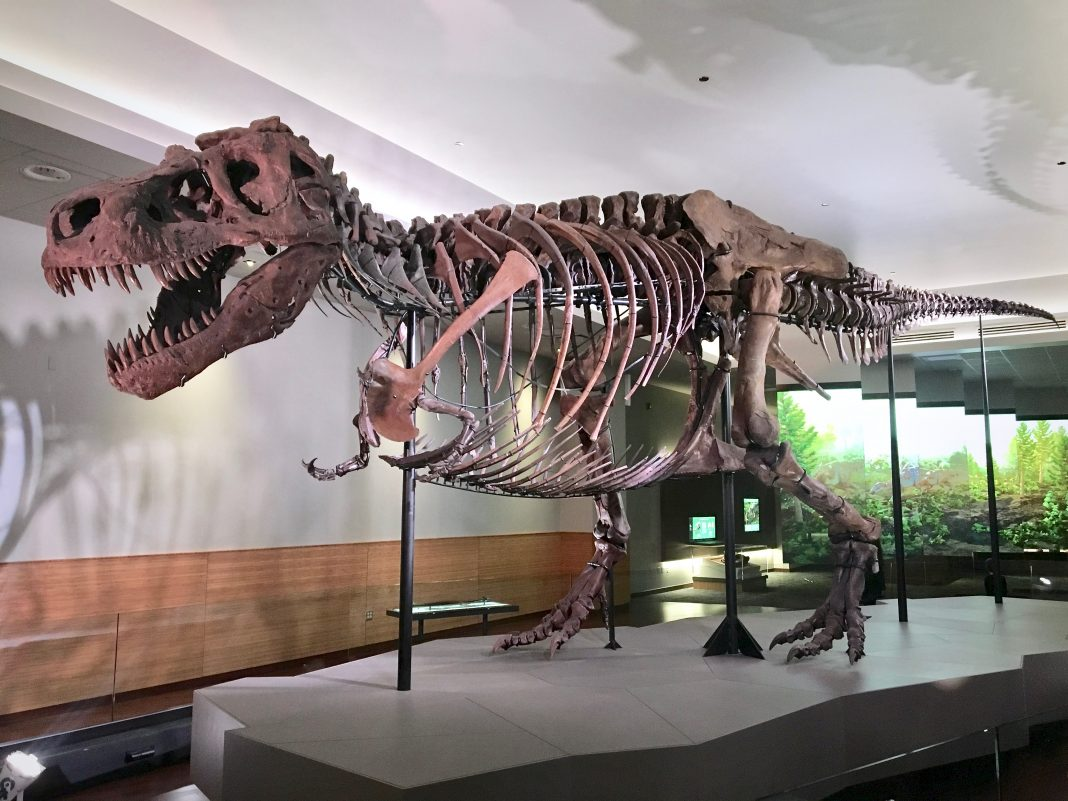 Role Of Technology In The Field Of Paleontology