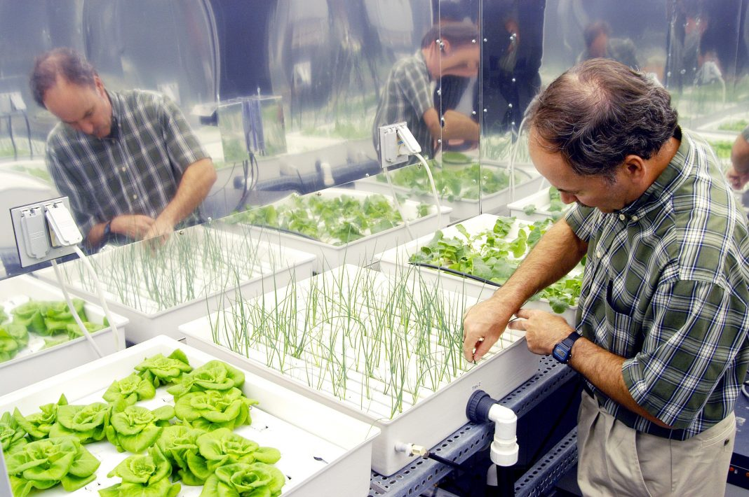 Role Of Technology In Hydroponics