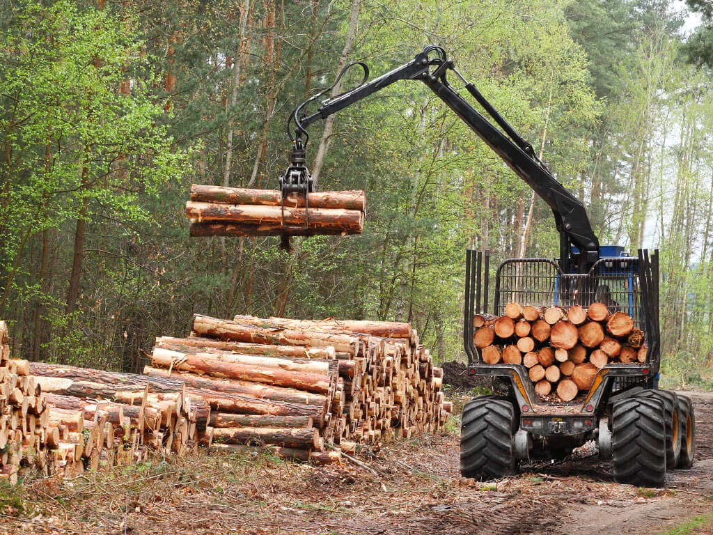 Importance of Technology in the Logging Industry
