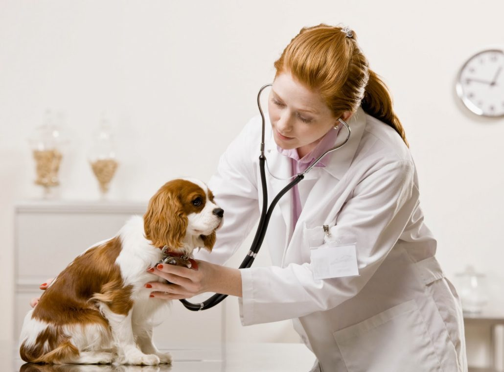 Role Of Technology In Pet Care