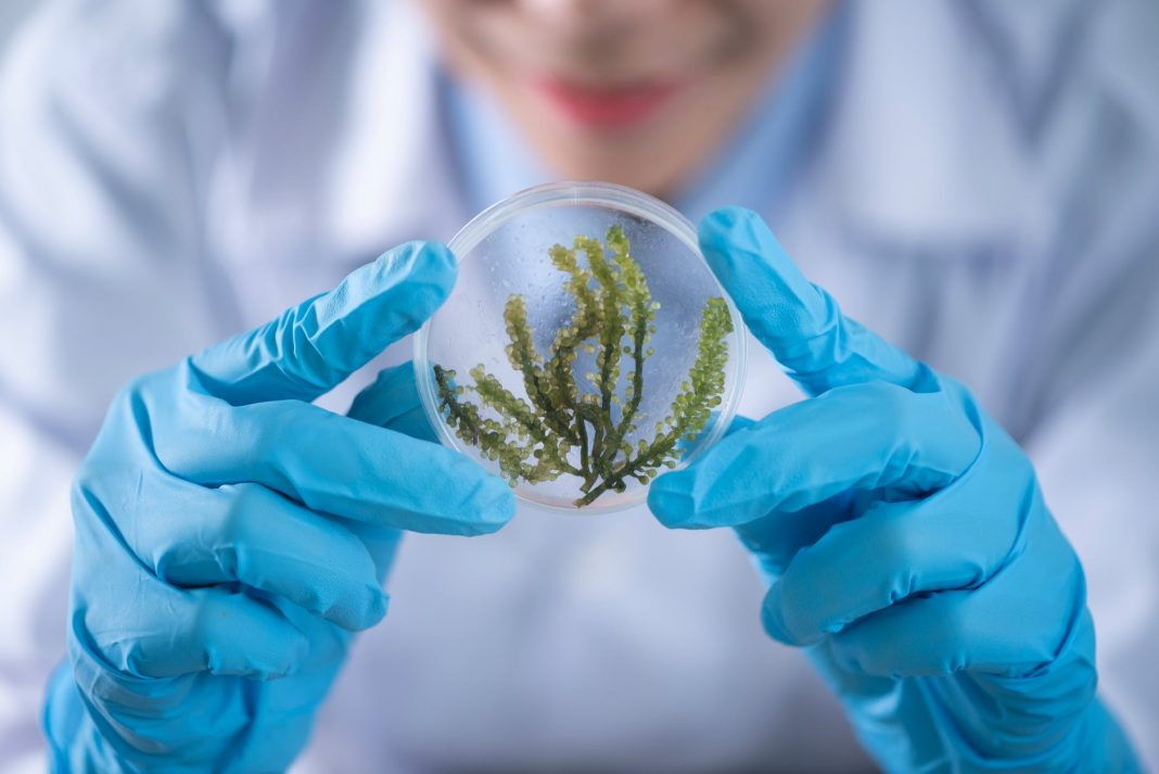 Impact Of Biotechnology On Different Fields